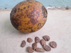 Akuamma Seeds